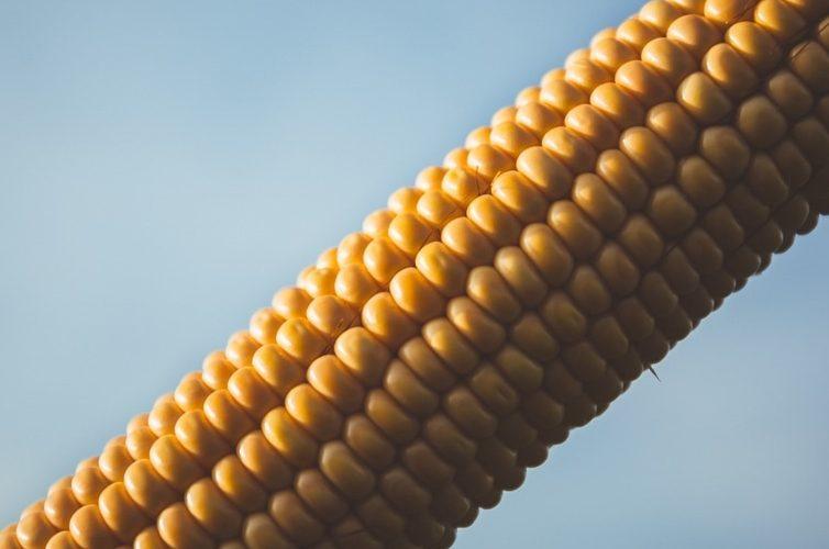 corn-connection