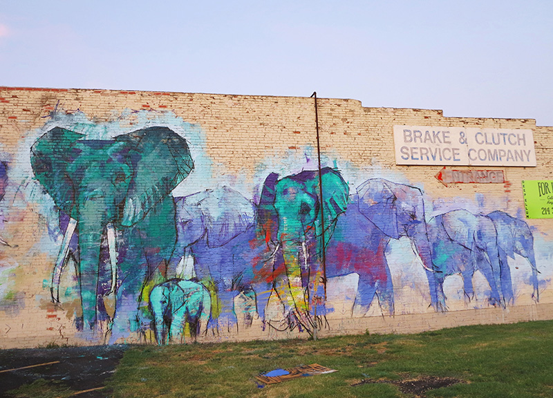 A new elephant mural is just the first of many new art projects coming to deep ellums walls